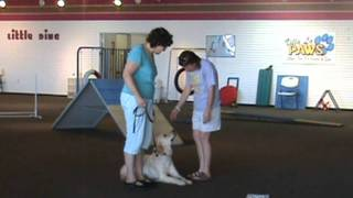 Villa La Paws Canine Academy Conducts Cgc Testing