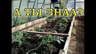 видео Капельный полив своими руками: система орошения на даче