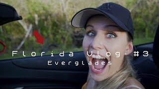 Everglades - den Alligatoren GANZ nah 🐊 | FLORIDA VLOG #3