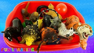 Learn Names of Wild Animals For Kids with Fun Box of Toys and Learn Colors
