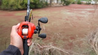 Fishing an INFESTED Pond (LOADED w/ HUGE BASS)