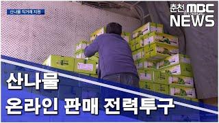 [춘천MBC]산나물 온라인 판매 전력투구_ 박민기