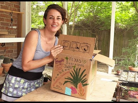 How to host a succulent swap: An unboxing and plant wrapping demo with Sucs for You