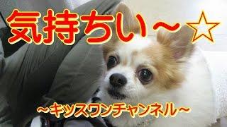"KiSSWann(キッスワン)♡http://kisswann.com 東京世田谷区にある ""わんち..."