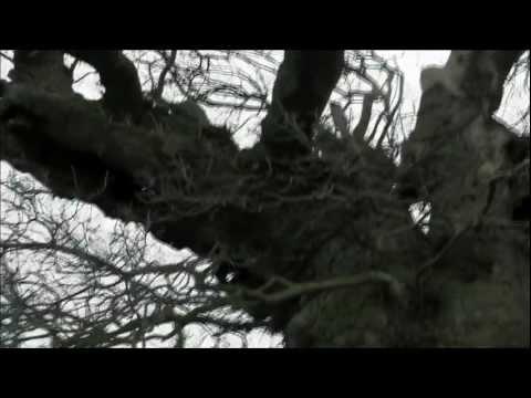 Hollow Trailer