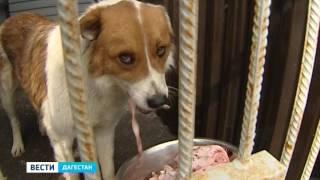 В Махачкале уже месяц действует приют для бездомных собак.