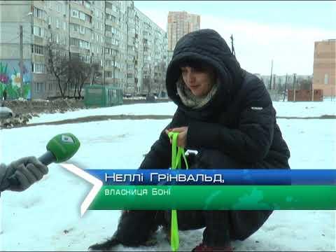 ObjectivTv: У Харкові побитому цуценяті знайшли будинок