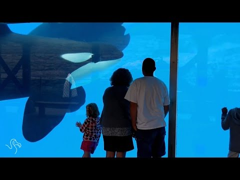 Breeding Ban at SeaWorld San Diego