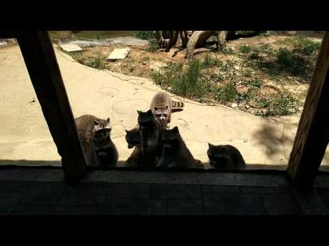 A trip to HANGZHOU-zoo
