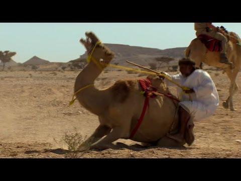 Trying To Ride A Crazy Camel - Ben & James Versus The Arabian Desert - BBC