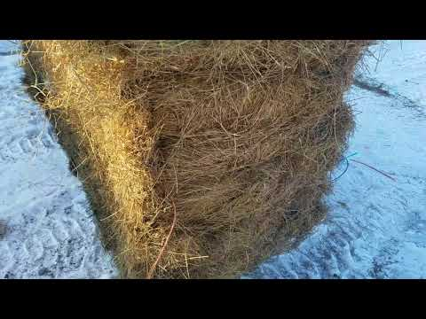 How we feed grass hay to the Black Angus here on the farm.