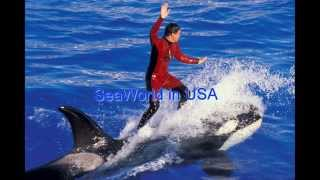 seaworld san diego discount tickets | seaworld orlando tickets | seaworld food in USA-SeaWorld2