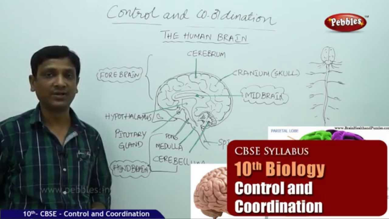 Ncert cbse syllabus class 10th biology control and ncert cbse syllabus class 10th biology control and coordination live videos ccuart Image collections