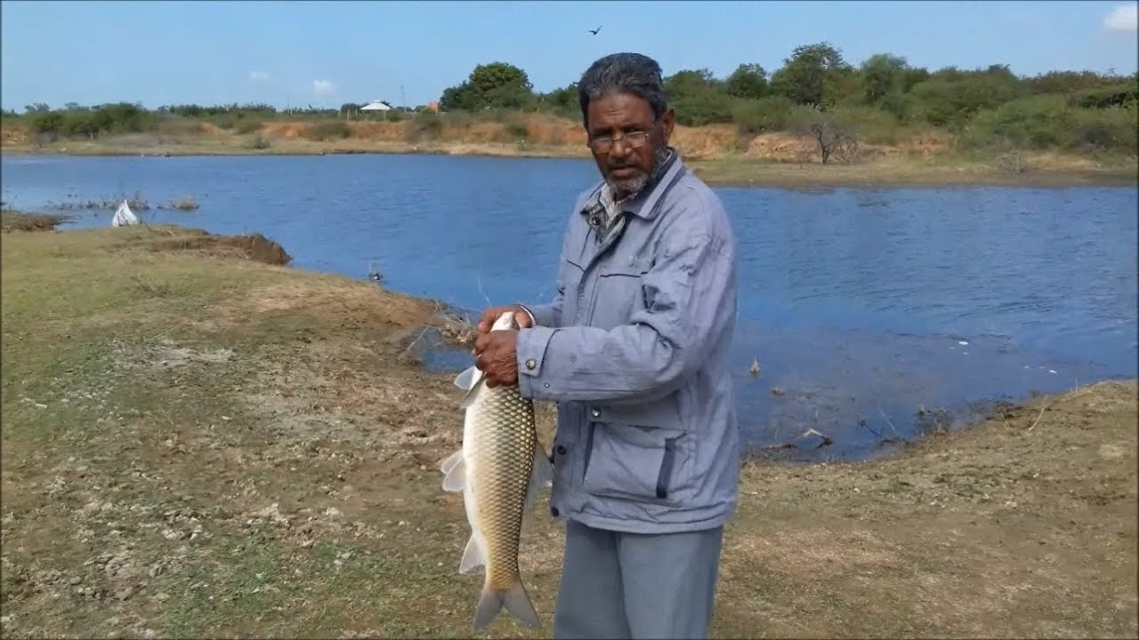 BIG FISH RAHU  5KG, 3KG, 2KG ROHU MRIGAL MACHI, hyderabad fishing, fish catching proces