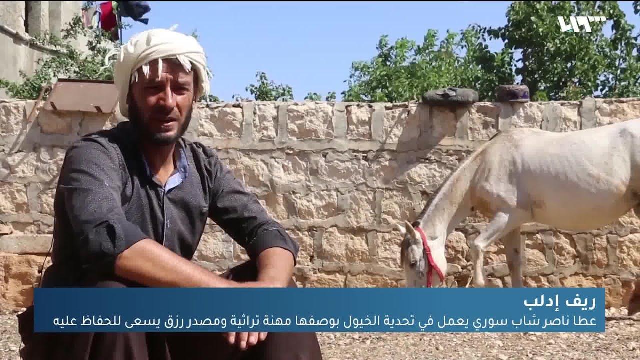 شاب من ريف إدلب يعمل في تحدية الخيول بوصفها مهنة تراثية ومصدر رزق له