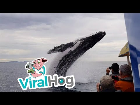 Whale Soaks Sight Seeing Boat