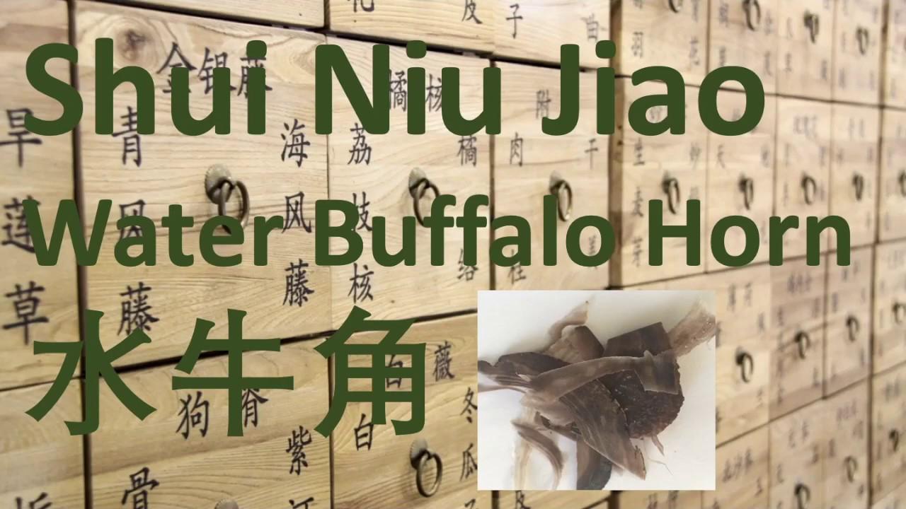 66 Chinese Herbal Medicine, TCM – Shui Niu Jiao (Water buffalo horn)( Cornu Bubali) 水牛角 – 中医 中药 #Herbalmedicine