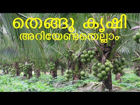 Coconut Farming തെങ്ങു കൃഷി അറിയേണ്ടതെല്ലാം