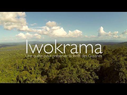 Iwokrama, une quète pour préserver la forêt des Guyanes (VOST français)