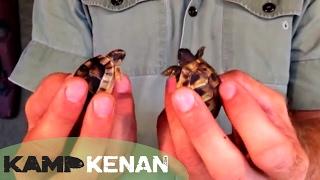 Best Tortoise For You?? Kamp Kenan Episode 10