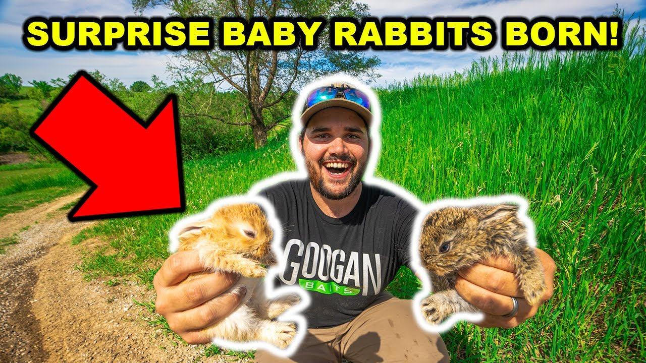 SURPRISE Baby Rabbits were BORN in My BACKYARD FARM!!! (They Had to be RESCUED)