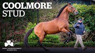 ITM Irish Stallion Showcase 2021 - Coolmore Stud
