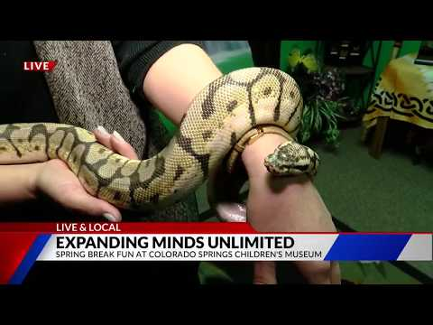 Colorado Springs Children's Museum Live & Local on FOX21 Morning News