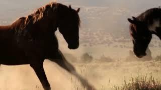 лошади клип по песни Дениса Майданова   про ВДВ