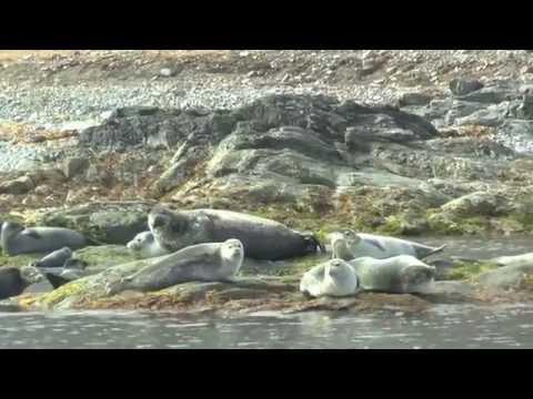 20 minutes Spitsbergen   1080p
