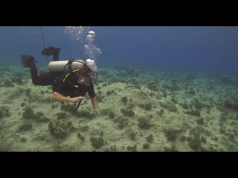 LIVE Underwater Scuba Dive in Grand Cayman