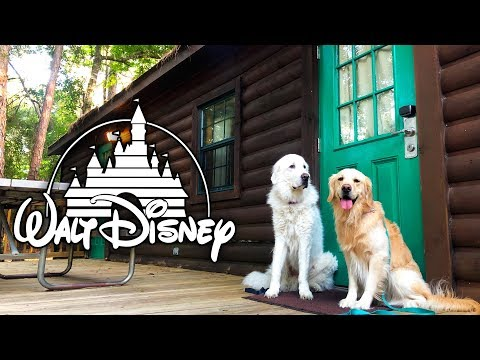 DOGS STAY AT DISNEY WORLD (Camp Wilderness Lodge Cabin) - SCS #193