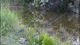 Ловля карпа и амура на кукурузу.Откуда здесь такая рыба?