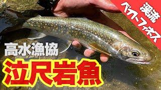 【渓流ベイトフィネス 】視聴者さんにガイドしてもらって泣尺岩魚釣れました。30cmまであと少し・・・・長野県高水漁協渓流ルアー釣り