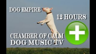 Dog Relax, Music Television Therapy. Music Specific for dog family relaxation 12 hours .
