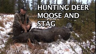 Kristoffer Clausen hunting deer, moose and stag with Sauer rifles