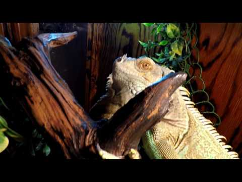 Reptile Tour Part 2 (the inside critters)