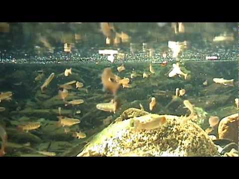 The Alaskan Aquarium II