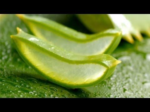 Алоэ – полезные свойства и применение алоэ, сок алоэ