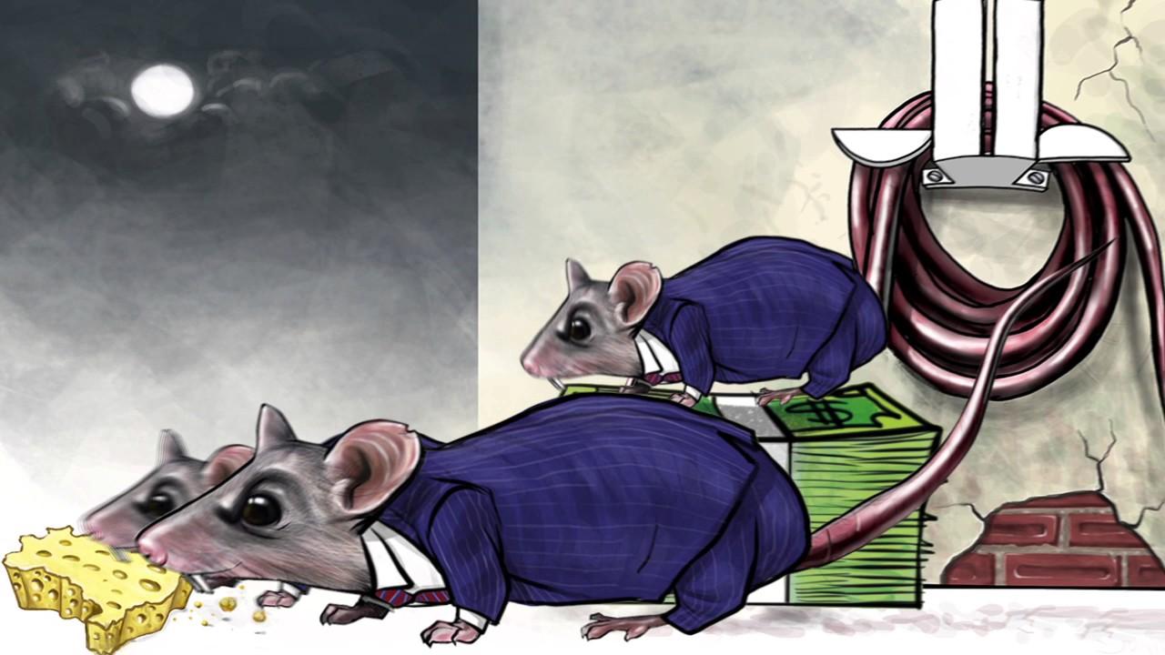 Resultado de imagem para ratos em brasilia