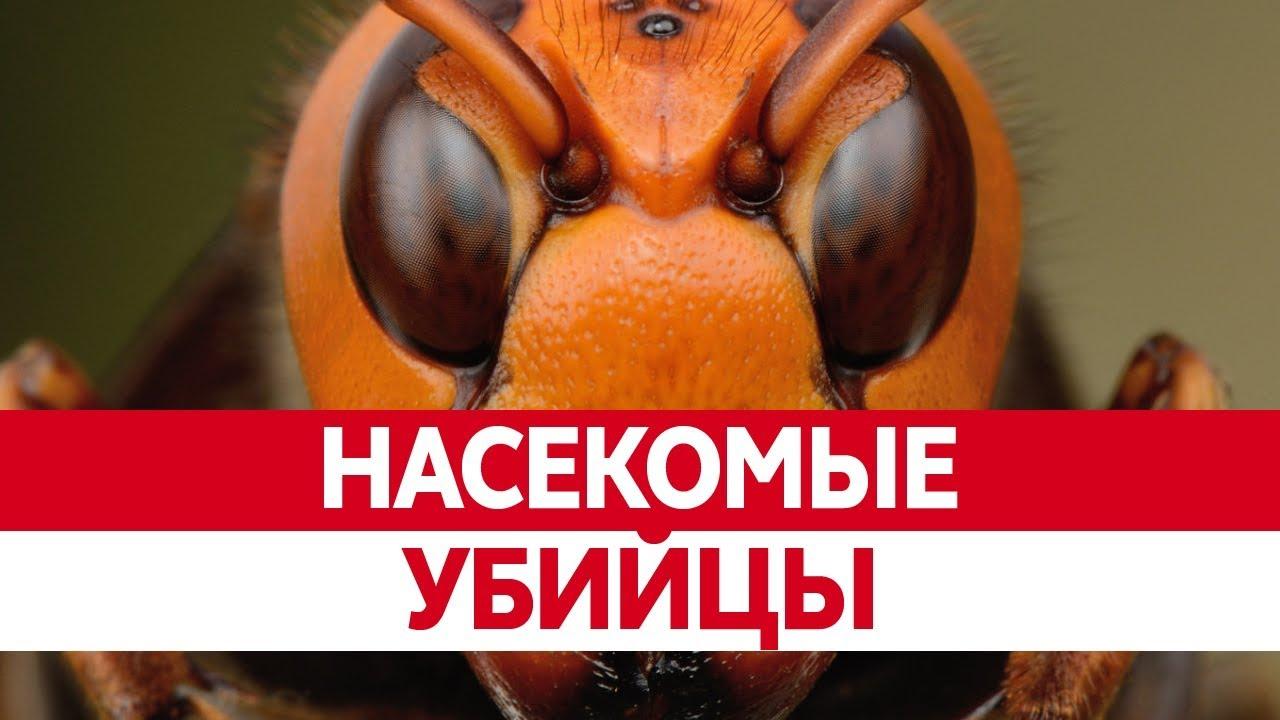 Самые ОПАСНЫЕ НАСЕКОМЫЕ в мире. Опасные пауки убийцы ...