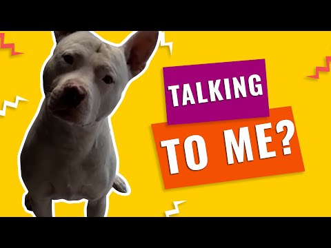 You Talking To Me? | Funny Video Compilation | Ooops Funniest Videos 2020