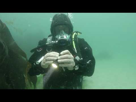 scuba-diving-equipment-review:-exposure-lights-action-dive-lights