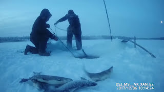 Зимняя рыбалка - ловля щуки на жерлицы. Как поймать щуку зимой pike