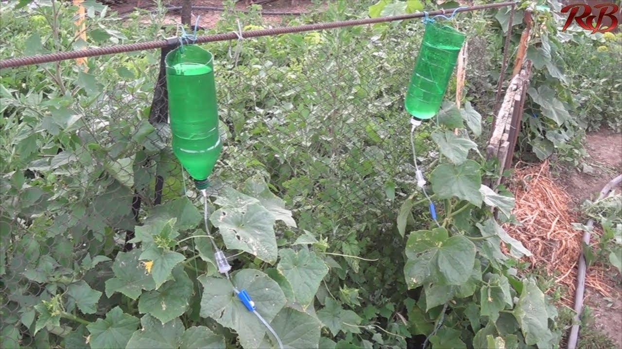 Капельный полив из медицинской капельницы.Drip irrigation from a medical dropper.