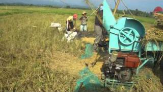 Harvesting of Rice...in Socorro,Oriental Mindoro,Philippines