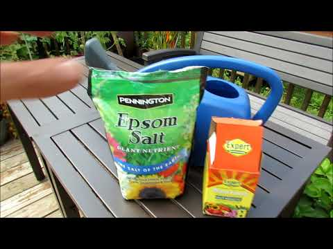 Container Vegetable Gardening: Using Epsom Salt, Fertilizer, My Mid August Routine