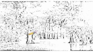 Auto Draw 2: Bald Cypress Trees At Sunset, Louisiana