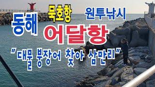 """동해 묵호항,어달항 바다 원투낚시 """"대물 붕장…"""