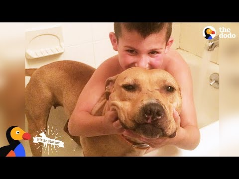 Pit Bull Rescued From Dog Fighting Is The Best Big Sister - KARMA | The Dodo Pittie Nation