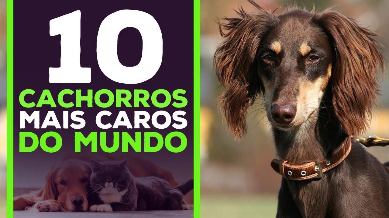 As 10 Raças De Cachorros Mais Caras Do Mundo